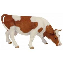 Vaca Simmental pastando - Papo