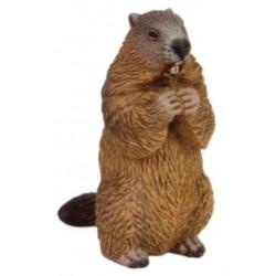 Marmota - Papo
