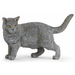 Gato Chartreux - Papo