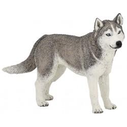 Husky de Siberia - Papo