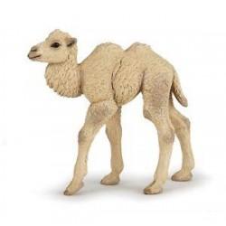 Camello Cria - PAPO