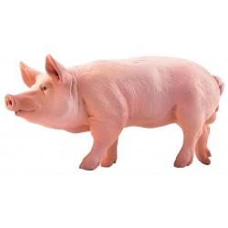 Cerdo - Papo
