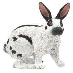 Conejo - Papo