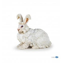 Conejo de Angora - Papo