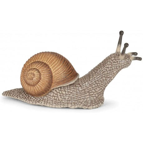 Caracol - Papo
