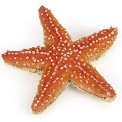 Estrella de Mar - Papo