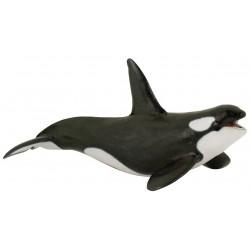 Orca - Papo