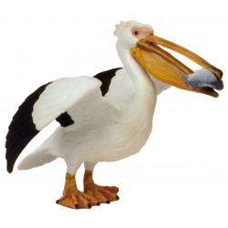 Pelícano - Papo