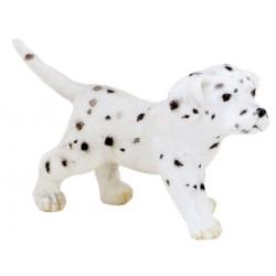 Cachorro Dálmata - Papo